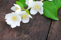 Jasmine flowers on an old wooden board Royalty Free Stock Image