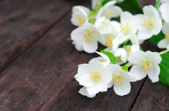 Jasmine flowers on an old wooden board Stock Photo