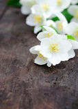 Jasmine flowers on an old wooden board Stock Images