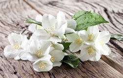 Jasmine flowers over old wooden table. Royalty Free Stock Images