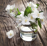 Jasmine flowers over old wooden table. Stock Image