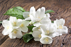 Jasmine flowers over old wooden table. Stock Photo