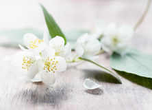 Jasmine flowers over wooden background Stock Images