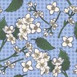 Jasmine flowers seamless background Stock Images