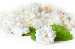 Jasmine flowers spread over white background Royalty Free Stock Images