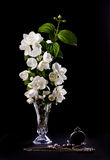 Jasmine flowers. Still Life with Jasmine flowers in a vase royalty free stock photography