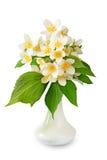 Jasmine flowers in vase. Stock Photos