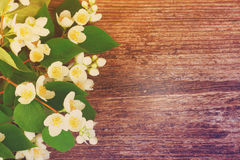 Jasmine flowers on wooden table Stock Images