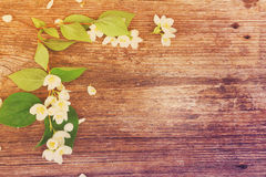 Jasmine flowers on wooden table Royalty Free Stock Photos