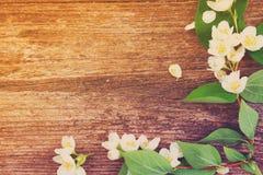 Jasmine flowers on wooden table Stock Photos