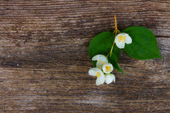 Jasmine flowers on wooden table Stock Photography
