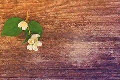 Jasmine flowers on wooden table Stock Photo