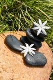 Jasmine flowers on zen black stones Royalty Free Stock Photo