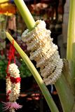 Jasmine and garland for Buddha offering Royalty Free Stock Images