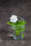 Jasmine in a glass. With water royalty free stock images