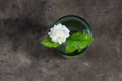 Jasmine in a glass. With water Stock Images