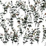Jasmine pattern Stock Photo