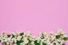 Jasmine, Philadelphus or mock-orange flowers border on pink background. Copy space, top view. Greeting card royalty free stock photography