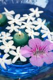 Jasmine, and pink Asarina, candles and blue water. Floral Mediterranean aromatheraphy royalty free stock images