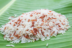 Jasmine rice and brown rice Royalty Free Stock Images