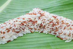 Jasmine rice and brown rice Stock Image