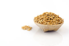 Jasmine rice husk. Stock Photography