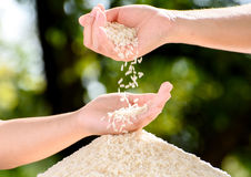 Jasmine rice in mother and child hands. Close up white Jasmine rice variety is Thailand major variety for consumption good smell and delicious in young mother Royalty Free Stock Images