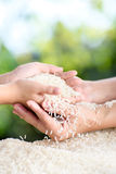 Jasmine rice in mother and child hands. Close up white Jasmine rice variety is Thailand major variety for consumption good smell and delicious in young mother Royalty Free Stock Photos