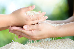 Jasmine rice in mother and child hands. Close up white Jasmine rice variety is Thailand major variety for consumption good smell and delicious in young mother Stock Photos