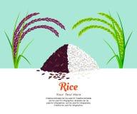 Jasmine Rice och risbär stock illustrationer
