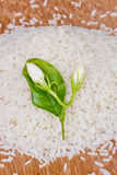 Jasmine Rice rice grian on wood background Royalty Free Stock Photo