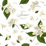 Jasmine seamless pattern Royalty Free Stock Photos