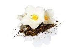 Jasmine Tea fotografía de archivo libre de regalías