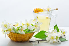 Jasmine tea, jasmine flowers and vanilla Stock Photography
