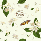 Jasmine tea seamless pattern Stock Photography