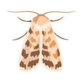 Jasminearum сумеречницы или manduca сфинкса золы Красочная иллюстрация шаржа Стоковые Фотографии RF