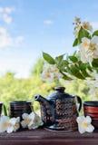 Jasminte i små keramiska koppar Royaltyfria Foton