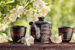 Jasminte i små keramiska koppar Arkivfoton