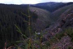 Jasna Forests, montanhas altas de Tatra, Vysoke Tatry imagem de stock