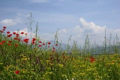 jasna idylliczna scena wiejskiej łąkowa Fotografia Royalty Free