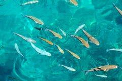 jasna ryba grupy woda Obraz Stock