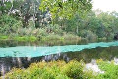 Jasna rzeka Zdjęcia Stock