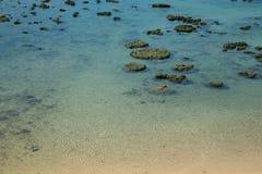 Jasna woda i koral Zdjęcia Royalty Free