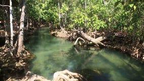 Jasna woda płynie wśród namorzynowych korzeni zbiory