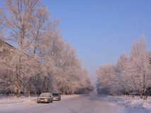Jasna zima krajobrazu miasta ulica w Novosibirsk z białym śniegiem na mrozowych drzewach obraz royalty free