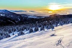 jasne futerkowy na czerwony słońca zachód słońca na zimę drzewa Zdjęcia Royalty Free