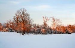 jasne futerkowy na czerwony słońca zachód słońca na zimę drzewa Obraz Stock