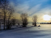 jasne futerkowy na czerwony słońca zachód słońca na zimę drzewa Zdjęcie Royalty Free