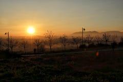 jasne futerkowy na czerwony słońca zachód słońca na zimę drzewa Fotografia Royalty Free