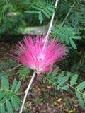 jasne, różowy kwiat Obraz Royalty Free
